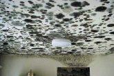 Plafond schimmel